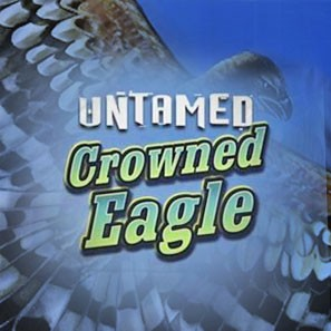 Untamed Crowned Eagle – принципы онлайн-игры